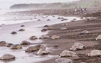 Sea turtle beaches, Costa Rica