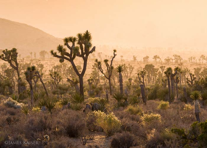 Joshua Tree, fall