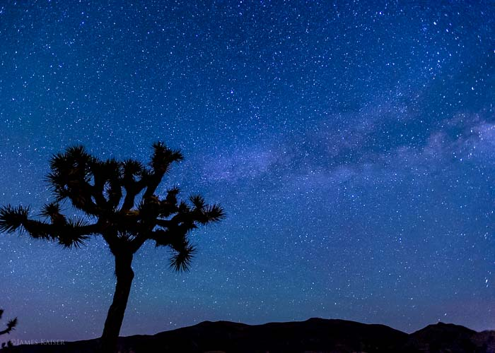 Joshua Tree summer stars
