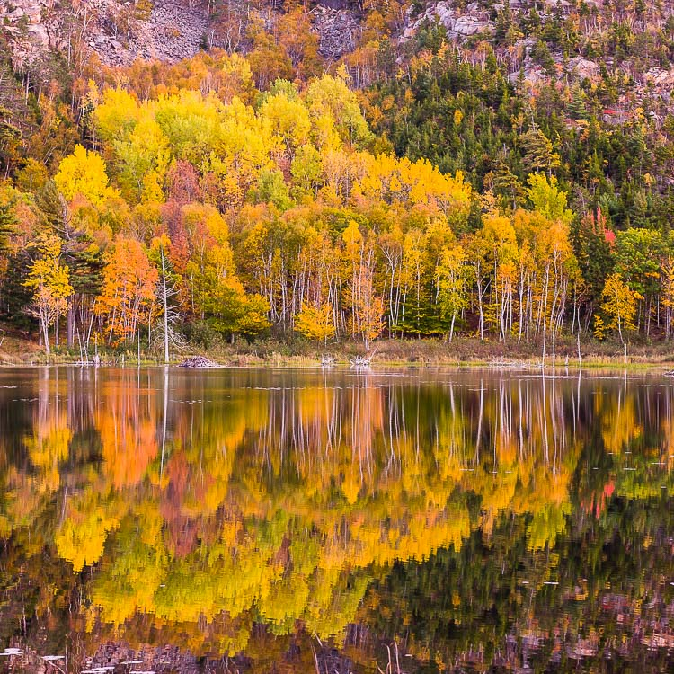 Fall foliage on Beaver Pond, Acadia