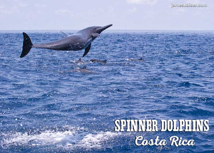 Spinner dolphins, Costa Rica