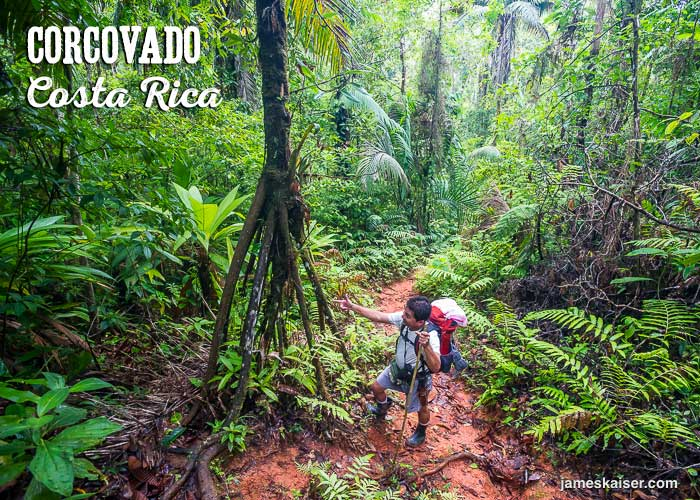 Hiking next to a walking palm in Corcovado National Park, Costa Rica