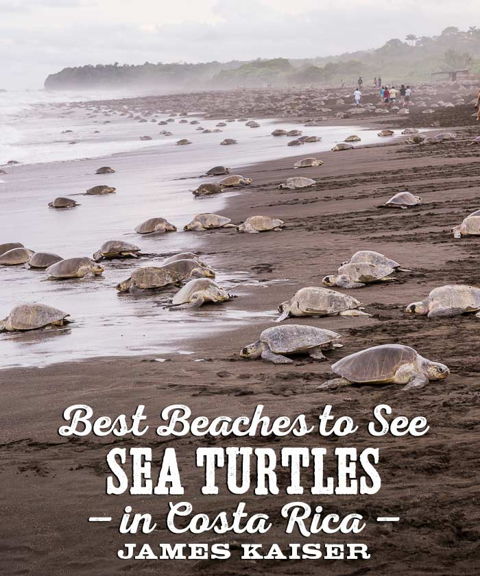 Best beaches to see sea turtles in Costa Rica